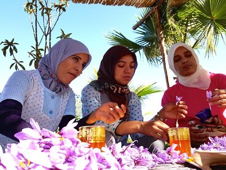 Safran Gewürzbasar - Safranernte 2015 Details 10