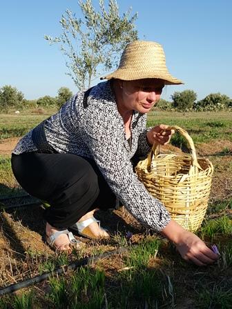 Claudia Quack bei der Safran Ernte